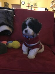 Phil as a puppy!